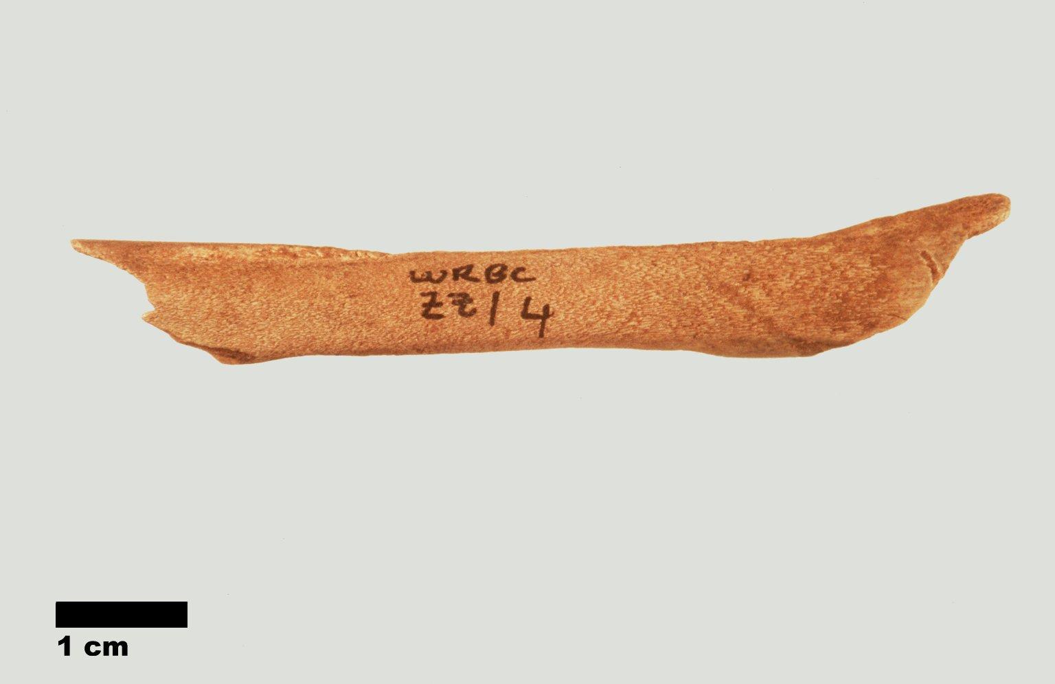 Archaeological bone